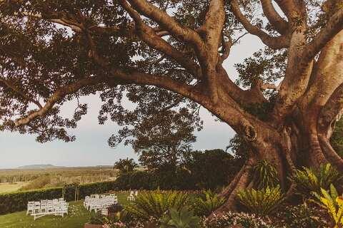 Fig Tree Wedding
