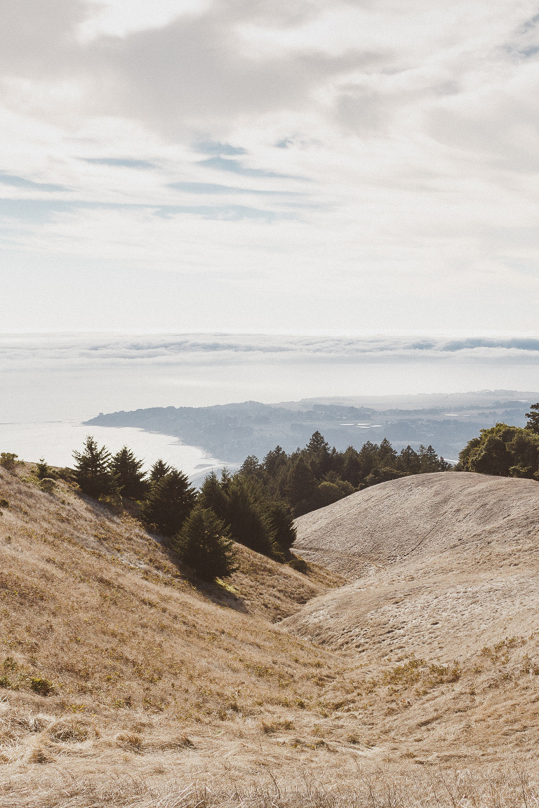 Mount Tamalpais Portraits